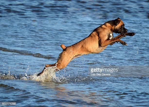 Dog running and jumping on beach