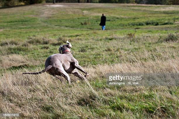 dog running down the hill, chasing a man