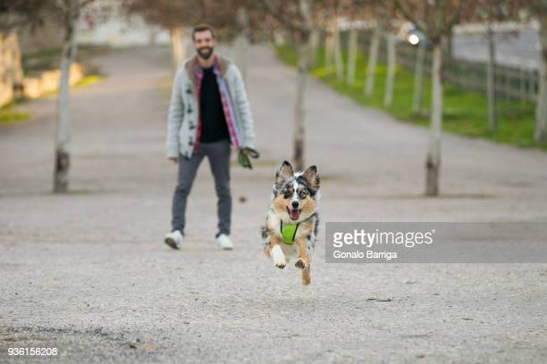 Dog running in park ahead of male owner