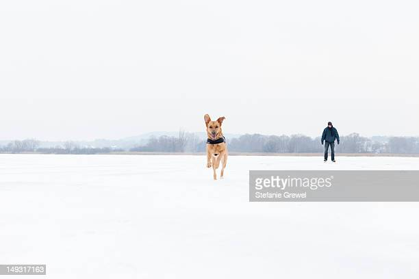 dog running in snowy field - stefanie grewel stock-fotos und bilder