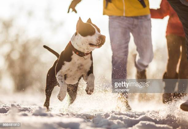 Dog running on a snow with people in background.