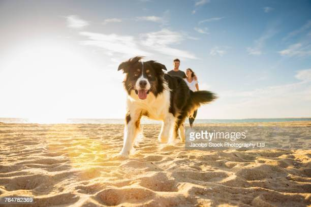 dog running on beach near caucasian couple - collie stock photos and pictures