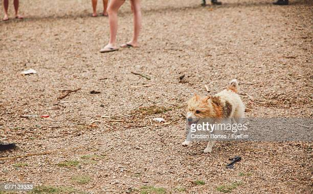dog running on beach - bortes cristian stock photos and pictures