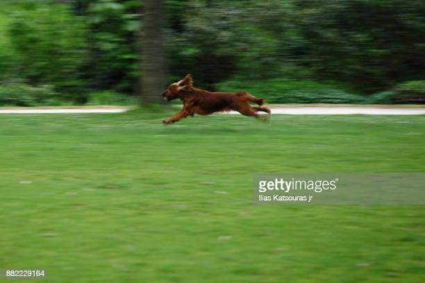 Dog running on grass field with ball in mouth, panning shot