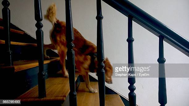Dog Running On Staircase At Home