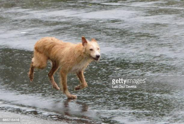 Dog running on street during day rainy