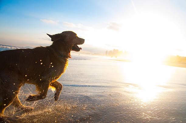 Dog Running On The Beach Wall Art