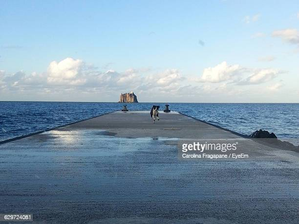 dog running on walkway amidst sea against sky - carolina fragapane stock pictures, royalty-free photos & images