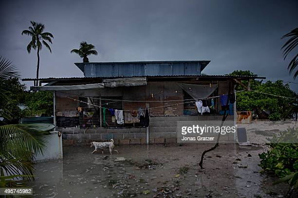 A dog running past a rundown house in the sea water that flooded the village Eita The people of Kiribati are under pressure to relocate due to sea...