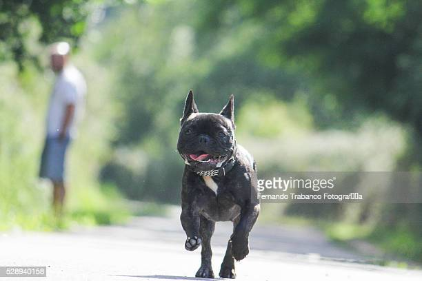 dog running with happy face