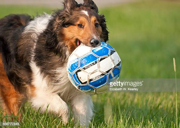 Dog running with soccer ball