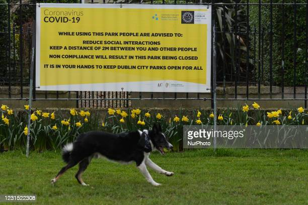 Dog runs next to the COVID-19 sign in Dublin's park during Level 5 Covid-19 lockdown. On Thursday, 4 March in Dublin, Ireland.