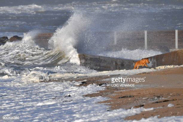 A dog runs on the beach as waves crash in Prefailles western France on January 1 2018 during heavy winds caused by storm Carmen / AFP PHOTO / LOIC...
