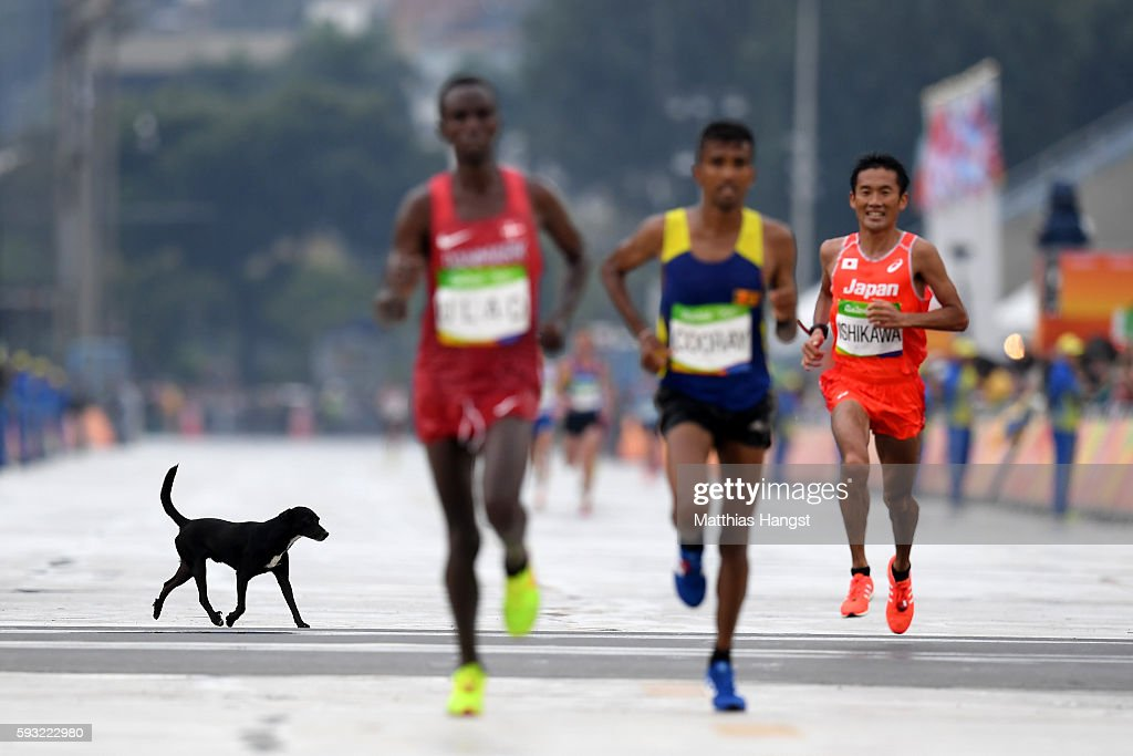 A dog runs on the course as Abdi Hakin Ulad of Denmark, Anuradha Indrajith Cooray of Sri Lanka and Suehiro Ishikawa of Japan approach the finish line during the Men's Marathon on Day 16 of the Rio 2016 Olympic Games at Sambodromo on August 21, 2016 in Rio de Janeiro, Brazil.