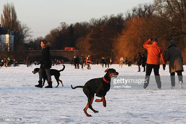 A dog runs on the frozen Aussenalster river during the 'Alstervergnuegen' on February 10 2012 in Hamburg Germany The very popular annual city...