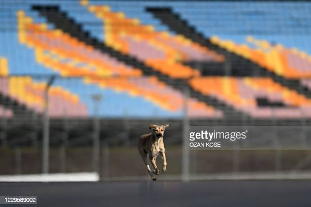 Dog runs on the track of Intercity Istanbul Park as drivers inspect the track in Istanbul on November 12, 2020. - The Formula One Grand Prix of...