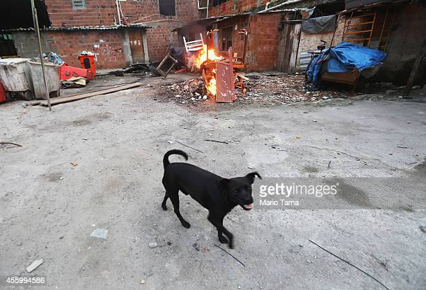 A dog runs past a small trash fire in a formerly deserted building which is currently home to dozens of families who occupy the building in the port...