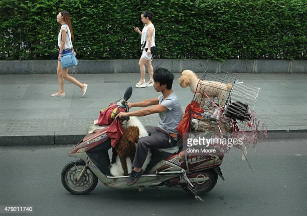 A dog salesman drives through the city streets on June 28 2015 in Chengdu China First inhabited more than 4000 years ago Chengdu is the capital of...