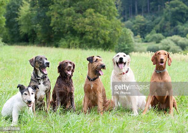 dog school - group of animals stock pictures, royalty-free photos & images