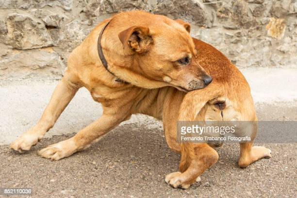 dog scratches