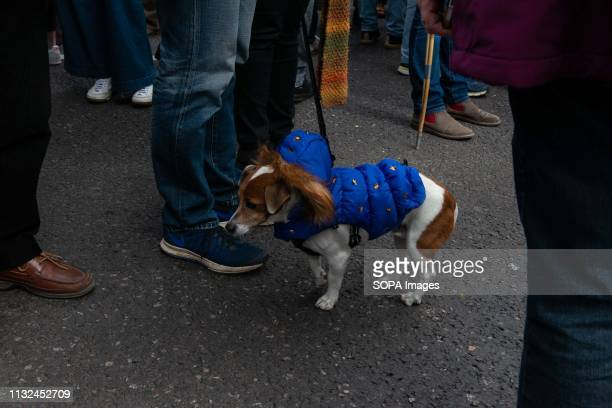 A dog seen in an EU supporting outfit during the protest Over one million protesters gathered at the People's Rally in London demanding a second vote...