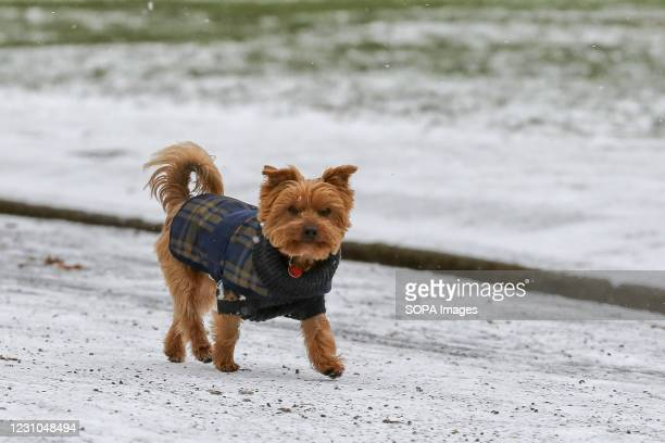 Dog seen in the snow in north London. The Met Office has issued severe amber snow warnings for London and south- east England.