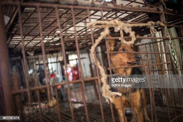 A dog seen inside a cage before being killed to sell his meat in a local market near Yuanyang village