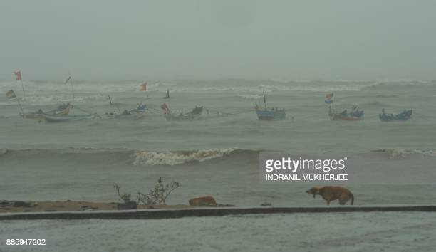 TOPSHOT A dog shakes off rainwater as anchored fishing boats are seen bobbing in the rough sea off a popular beachfront promenade in Mumbai on...