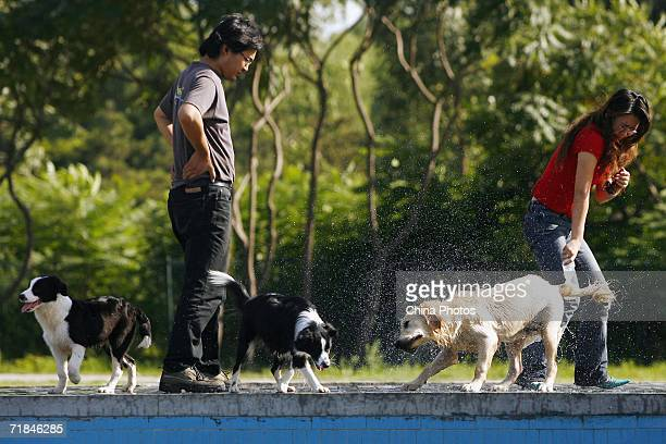 A dog shakes off water after swimming at the Pet Club at a park on September 10 2006 in Beijing China Experts predict that the annual sale of pet...