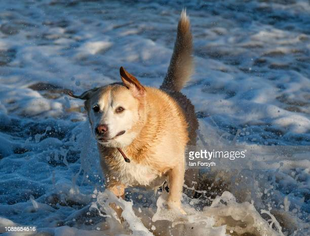 A dog shakes off water as it leaves the cold water of the North Sea on New Year's Day on January 01 2019 in Saltburn By The Sea England