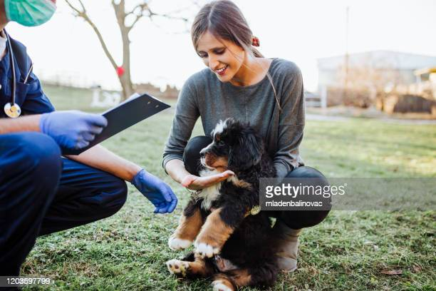 dog shelter - pet adoption stock pictures, royalty-free photos & images