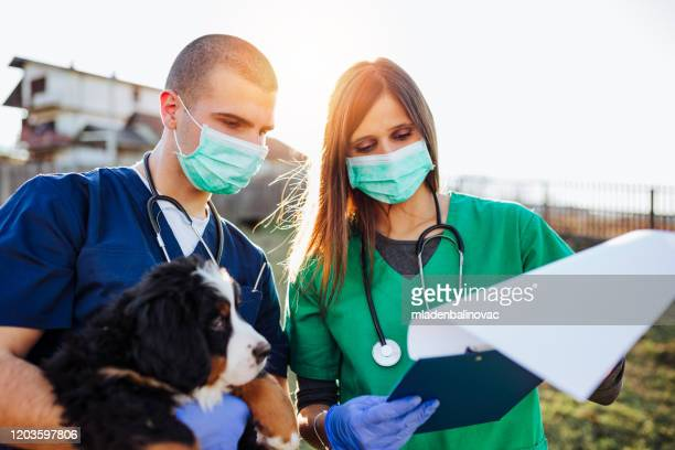 dog shelter - animal shelter stock pictures, royalty-free photos & images