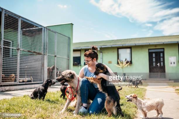 refugio para perros - temas de animales fotografías e imágenes de stock