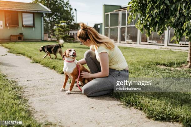 dog shelter - dog pound stock pictures, royalty-free photos & images