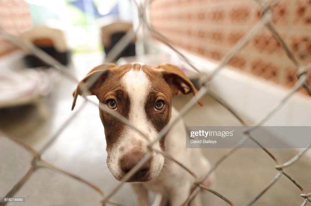 犬の保護施設 : ストックフォト