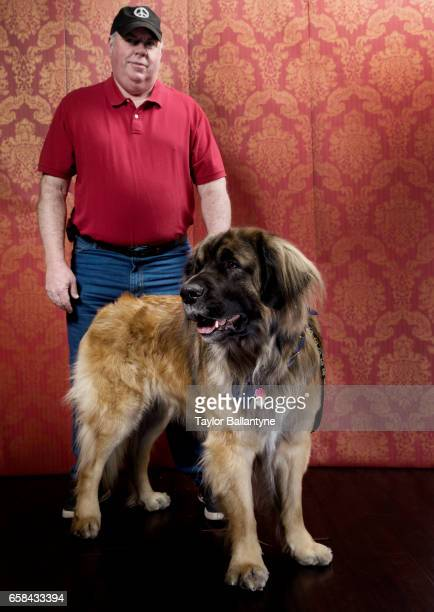 141st Westminster Dog Show Portrait of Leonberger and handler backstage before Day 1 of Best of Breed Judging event at Pier 94 New York NY CREDIT...