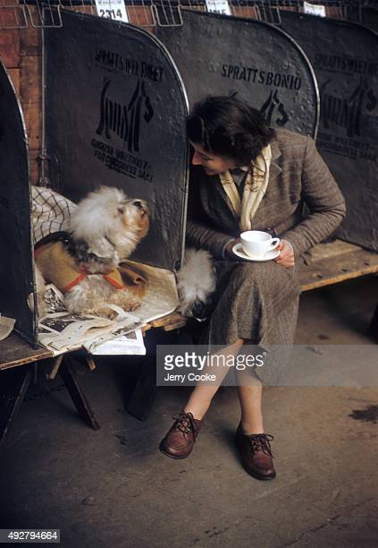 Cruft's Annual Dog Event: View of Audrey Salisbury with two Dandie Dinmont terriers during show at Olympia. London, England 2/9/1956 CREDIT: Jerry...