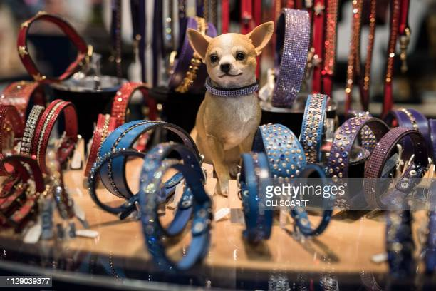 A dog sits among bejewelled dog collars displayed for sale on a trade stall on the first day of the Crufts dog show at the National Exhibition Centre...