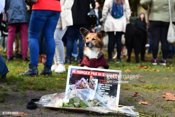 A dog sits by a placard against horse meat during a demonstration to defend animal rights during the first Animal's Pride on November 5 2017 in...