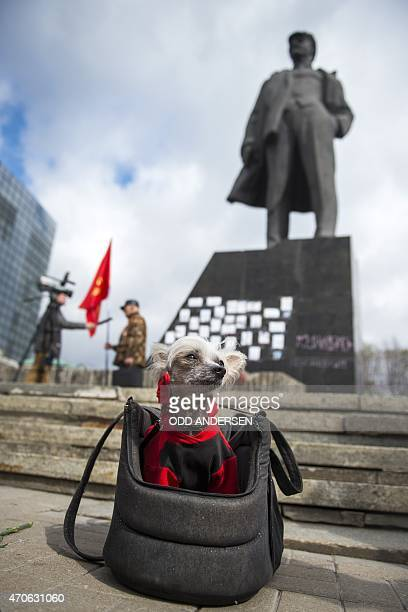 A dog sits in a basket as its owner takes part in a ceremony for the birthday of Lenin in Donetsk on April 22 2015 in the selfproclaimed Donetsk...