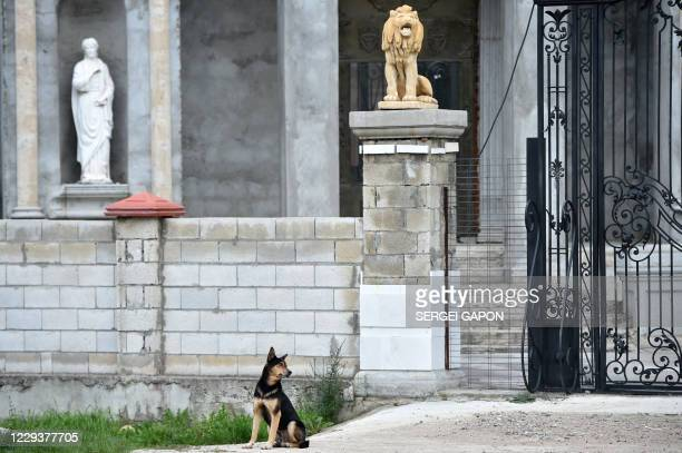 Dog sits in front of a house in the Gypsy Hill quarter in the town of Soroca, some 155 km north of Chisinau, on October 31, 2020.