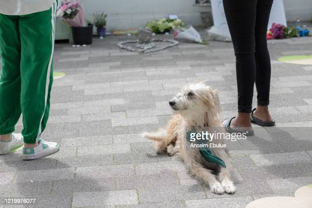 A dog sits in front of the Grenfell memorial display on June 14 2020 in London England Official memorials for the 2017 Grenfell Tower fire which...
