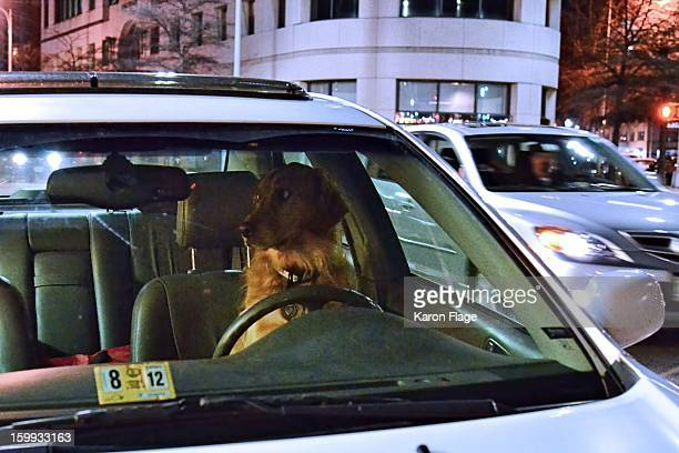 CONTENT] A dog sits in the driver's seat while its owner is away