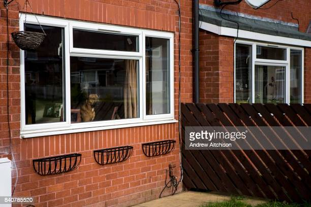 A dog sits in the window of a house on a council estate in Leyland Lancashire