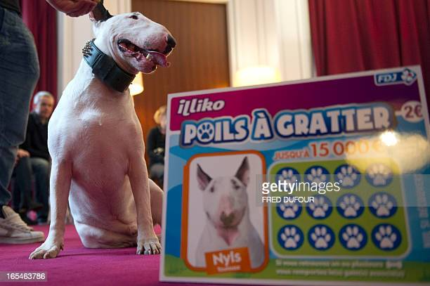 A dog sits next to a ticket of 'Poils a gratter' the new scratchcard game of the Francaise des Jeux the operator of France's national lottery games...
