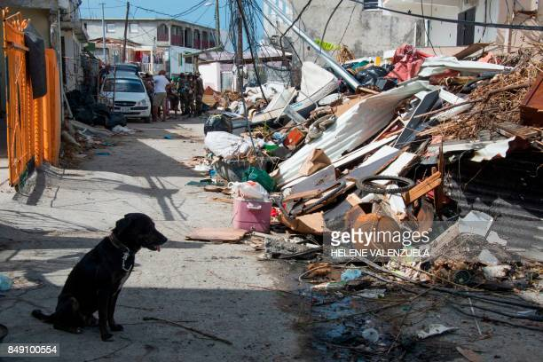 TOPSHOT A dog sits next to detritus on September 18 in Sandy Ground on the French Caribbean island of SaintMartin after it was hit by Hurricane Irma...