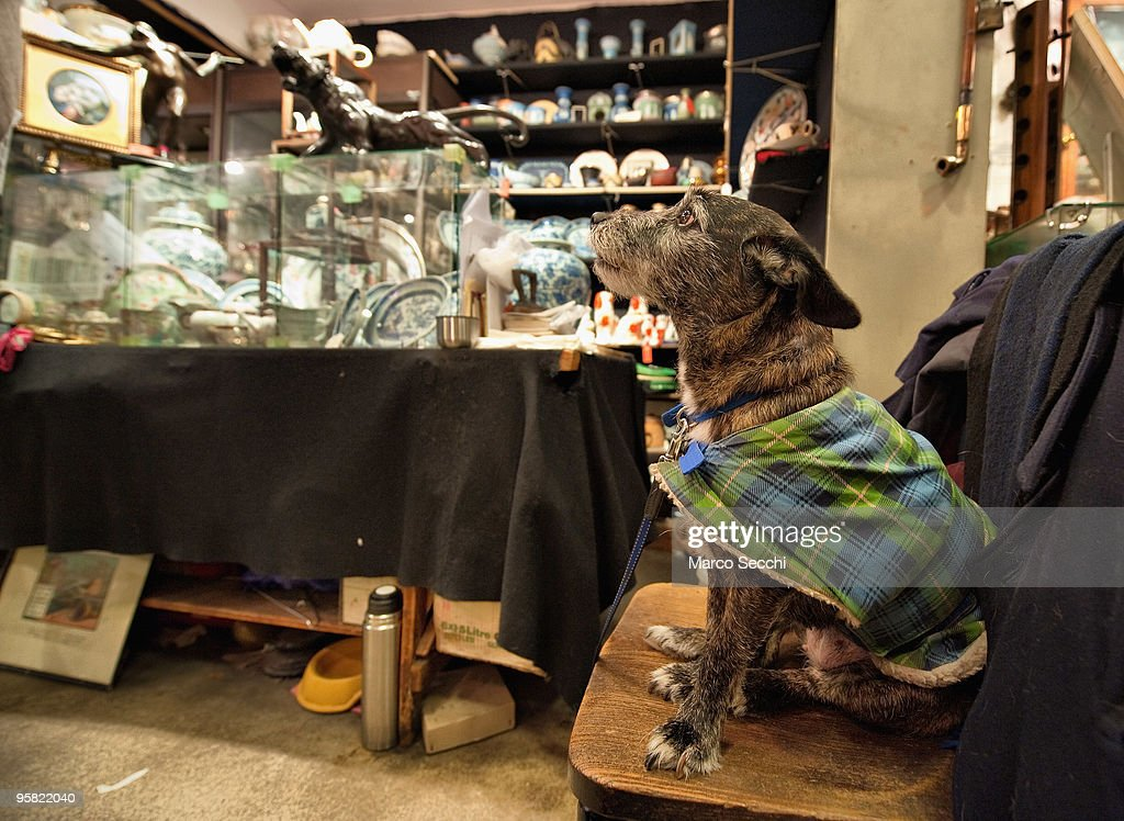 A dog sits on a chair in its owners stall inside the Roger's Gallery in Portobello Road on January 16, 2010 in London, England. Portobello traders fear for the Market's future after Lipka's Antiques Arcade, where more than 150 traders had their stalls, was redeveloped to accommodate a large High street chain store.