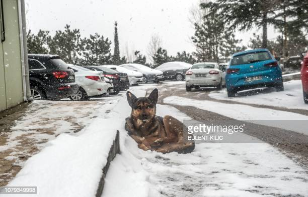 A dog sits on a street on Camlica Hill on January 8 following snowfall over the Turkish city of Istanbul