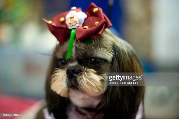 A dog sits on a table during the seventh edition of the Mi Mascota fair in Malaga on November 24 2018