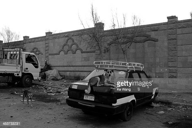 CONTENT] A dog sits on a taxi outside a Coptic Christian graveyard in Cairo Egypt April 8 2012